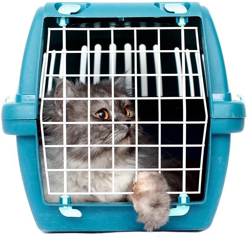Перелет кота в самолете