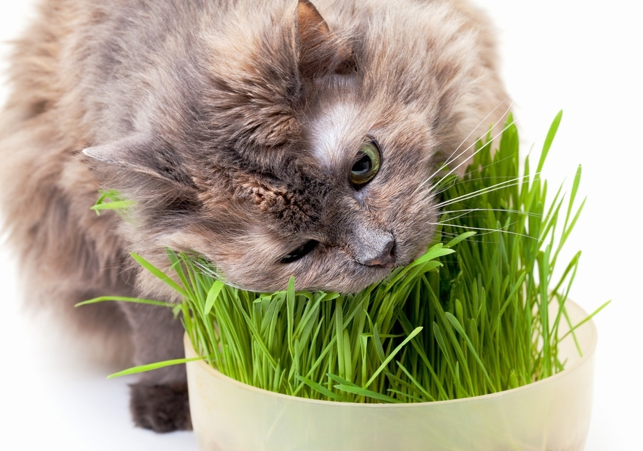 Какие нужны витамины коту