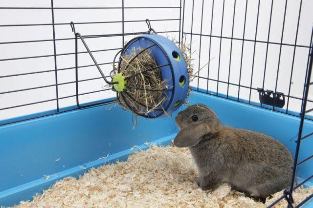 Кормушка для декоративного кролика своими руками 77