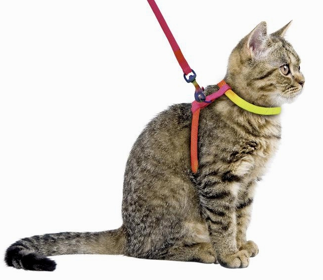 How to train a cat to use a harness