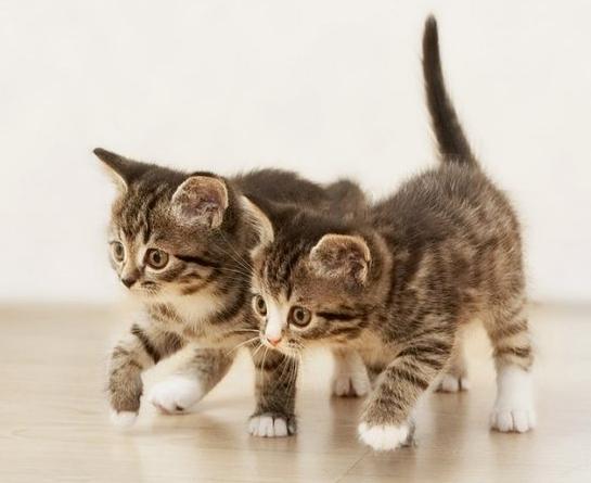 Кошки и коты имена и клички