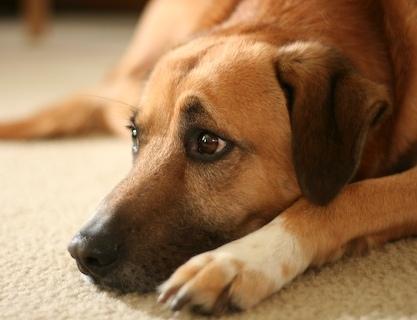 Купить Сухой Корм Royal Canin (Роял Канин) Feline Health