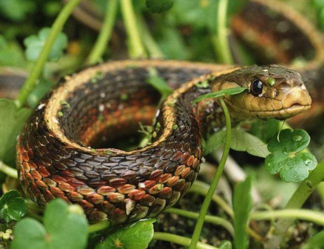 Анатомия змеи