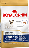 FRENCH BULLDOG JUNIOR (ФРАНЦ. БУЛЬДОГ)