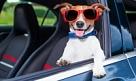 Как приучить собаку к автопутешествиям