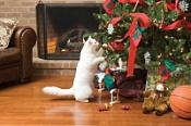 Как спасти новогоднюю елку от домашнего животного