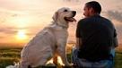 Уникальные способности собак, о которых нужно знать