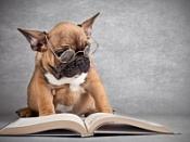 Установлено, почему собаки умнее котов, но глупее людей