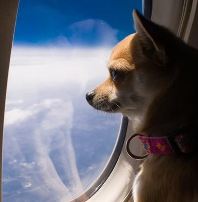 Вспомогательныеовары для выставок собак